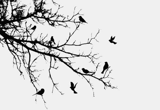 roosting birds
