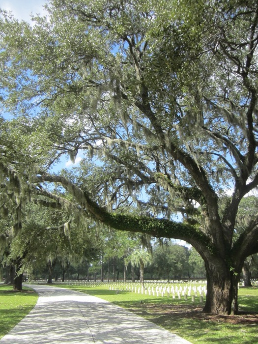 Beaufort National Cemetery oak